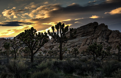 joshua-tree-sunset