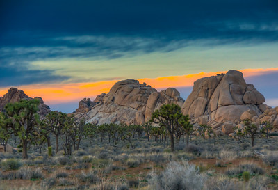 joshua-trees-rocks-sunset