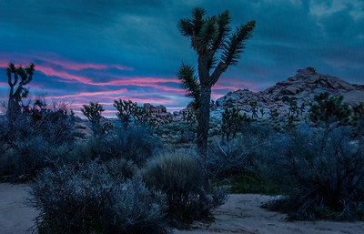 joshua-tree-pink-sunrise-2