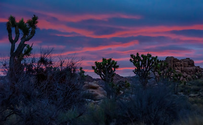 joshua-tree-sunrise