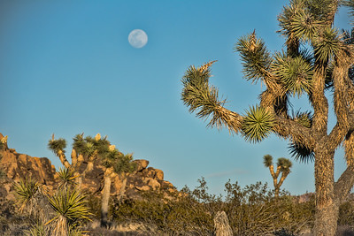 joshua-tree-full-moon-2