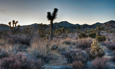 joshua-tree-morning-2