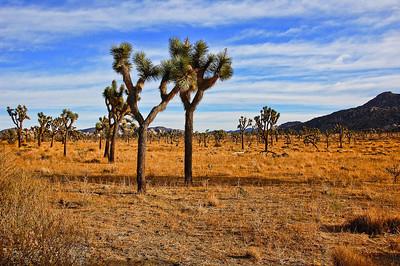 joshua-tree-desert-2