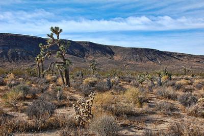 joshua-tree-desert