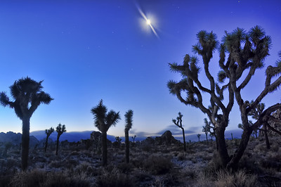 joshua-tree-night-moon