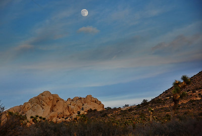 joshua-tree-full-moon