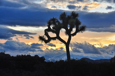 joshua-tree-clouds