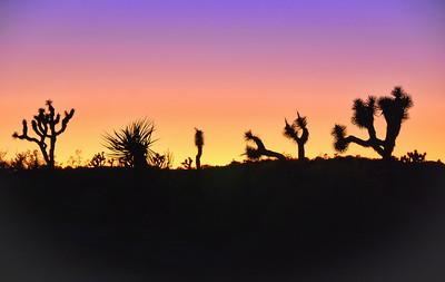 desert-sunset-3
