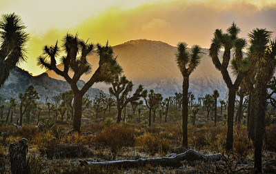 joshua-tree-frozen-sunrise-2-1