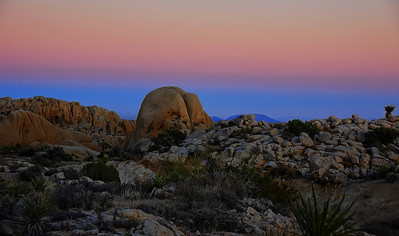 joshua-tree-national-park-2