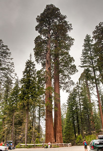 grants-grove-sequoias