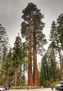 grants-grove-sequoias