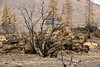 Lava Beds NP CA wildfire damage (4)