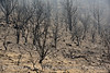 Lava Beds NP CA wildfire damage (5)