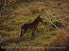 Far View foal (2)