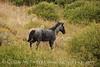 Dappled Gray Mare, Wetherill (17)