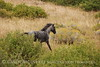 Dappled Gray Mare, Wetherill (14)
