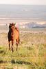Feral horses Far View (3)
