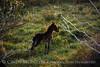 Far View foal (1)