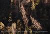 Dead trees, Mesa Top, Mesa Verde NP (2)