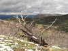 Geologic Overlook fire damaged trees (9)