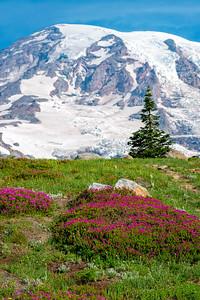 Skyline Flowers - Mount Rainier-2