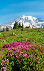 Skyline Flowers - Mount Rainier-4