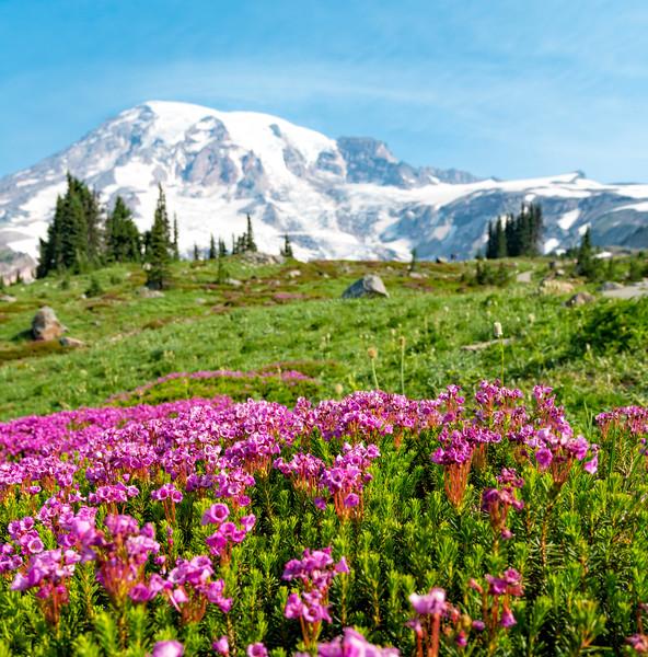 Skyline Flowers - Mount Rainier-3