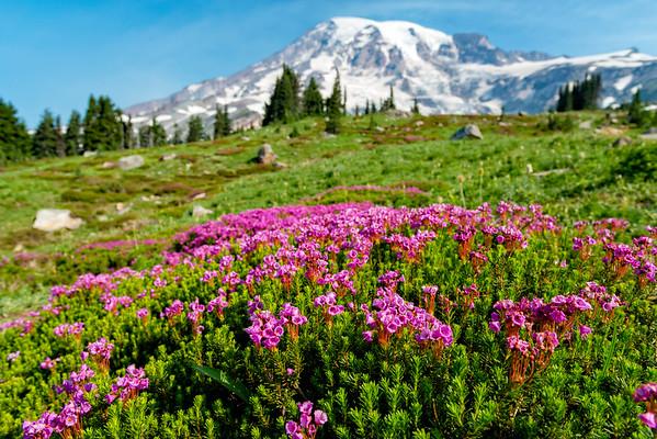 Skyline Flowers - Mount Rainier-1