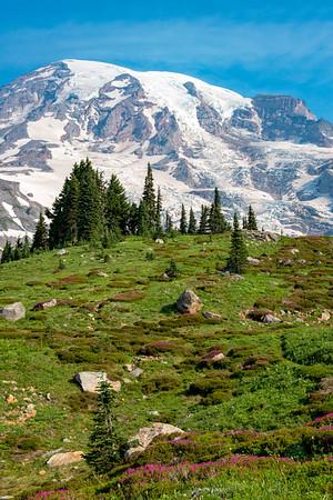 Skyline Flowers - Mount Rainier-5