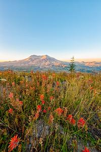 Mount St  Helens Sunrise Flowers - Mount St  Helens-3