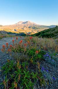 Mount St  Helens Sunset Flowers Fish Eye - Mount St  Helens