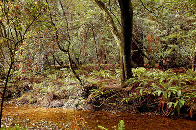 The pristine beauty of the forest