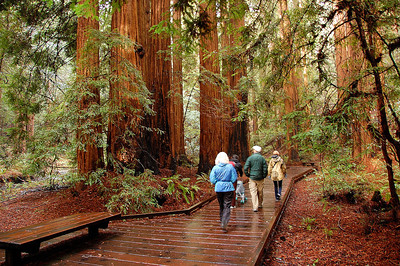 Walking through the redwoods
