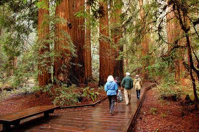 Walking through the redwoods