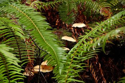 Ferns and mushrooms