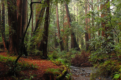 The wonders of Muir Woods