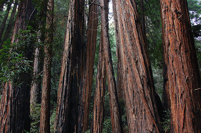 This is what Muir Woods is all about