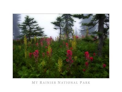 Mount Rainier National Park Wild Flowers