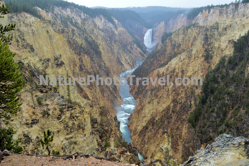 Yellowstone Grand Canyon, Lower Falls. Artists Point