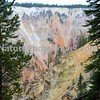 Yellowstone Grand Canyon, Lower Falls. Artists Point, Side Shot