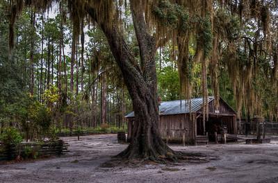 mossy-tree-barn