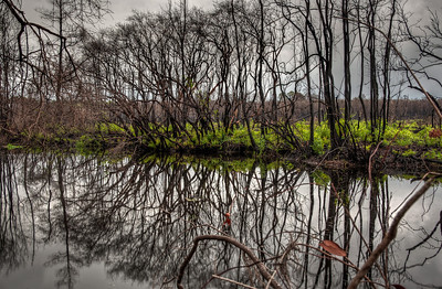 trees-canal-reflection
