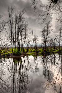 suwannee-canal-reflection-2