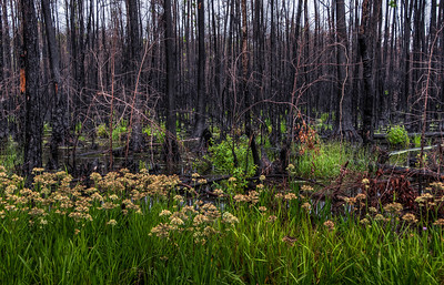 swamp-flowers-trees-2