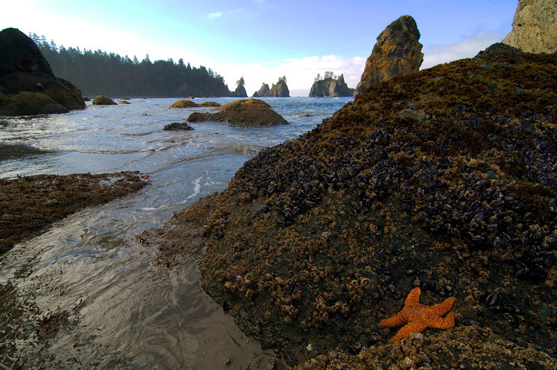 Shi Shi beach, Olympic National Park.   October 2009