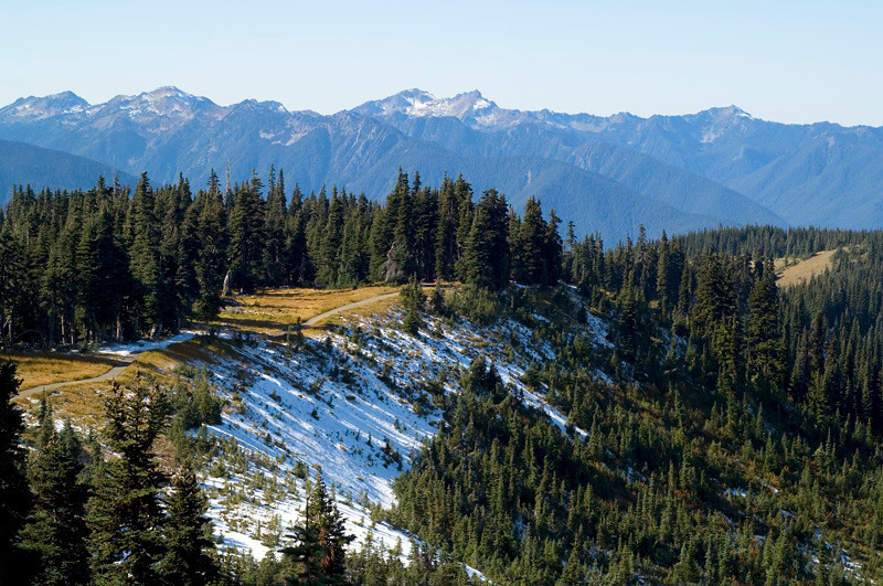 Hurricane Ridge area, Olympic National Park. October 2009