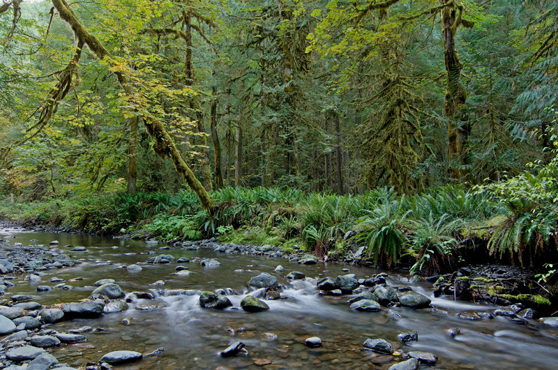 Barnes Creek, Olympic National Park, October 2009