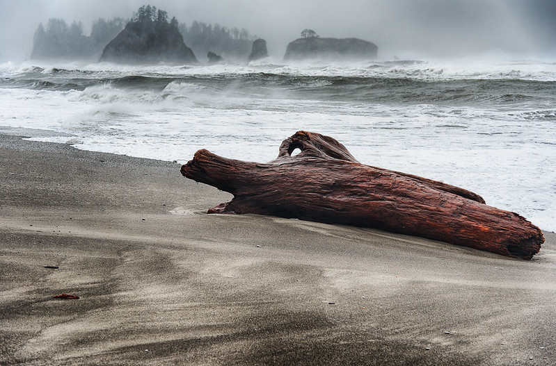 Watersoaked Driftwood - Rialto Beach