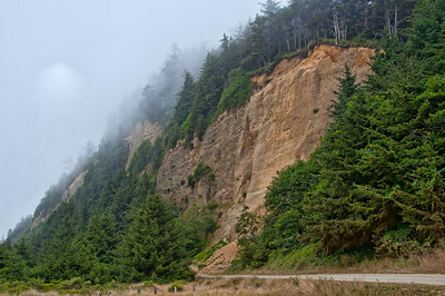 foggy-forest-cliffs